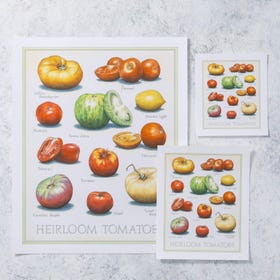 Cook's Illustrated Unframed Print: Heirloom Tomatoes