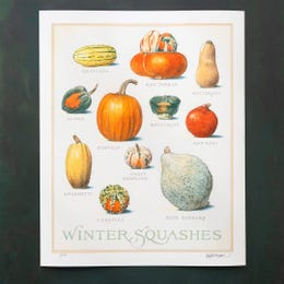 Limited Edition Signed Print: Winter Squash