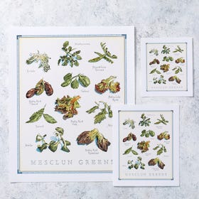 Cook's Illustrated Unframed Print: Mesclun Greens