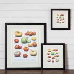 Cook's Illustrated Framed Print: Heirloom Tomatoes